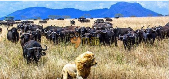 动物世界全集高清马 动物世界全集狮狼大战国语视频
