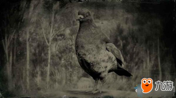 《荒野大镖客2》岩鸽在哪刷新 岩鸽刷新坐标图一览