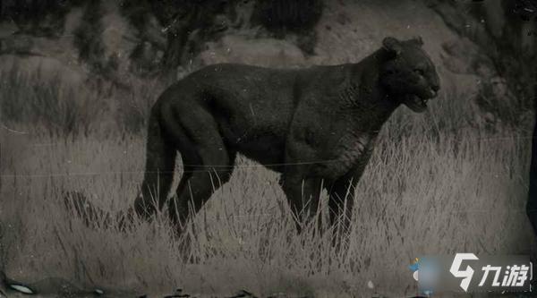 《荒野大镖客2》传说美洲狮图鉴怎么样 传说美洲狮图鉴介绍