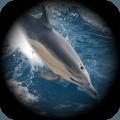 海豚模拟生存