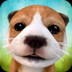 小狗模拟加速器