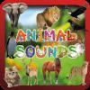 Animal Sounds & Animal Names加速器