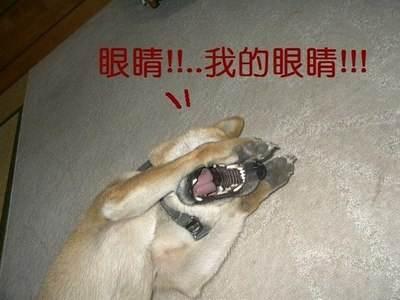 江东小霸王--《啪啪三国2》金卡孙策