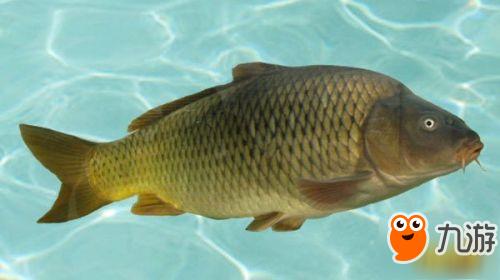 阴阳师现世式神信物鱼图片